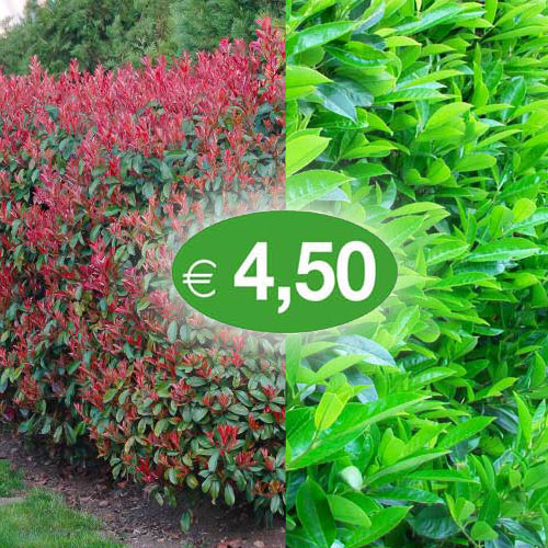 photinia+viburnum-prezzo